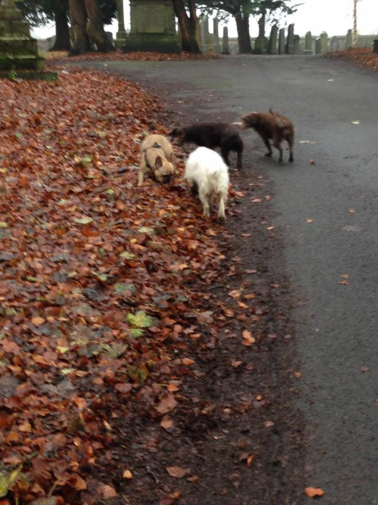 Dog Walking in Shawlands